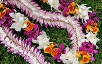 Further Floral Details